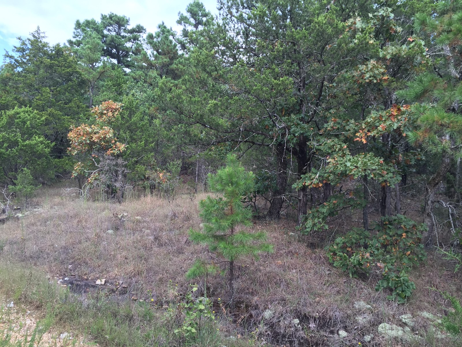 No.01575 44.74 Wooded Acres for Hunting or Home Site.