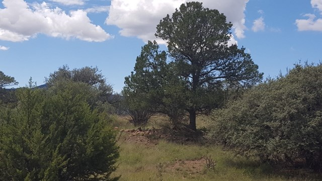 Silver City, NM Land For Sale, 1.375 acres in SW NM