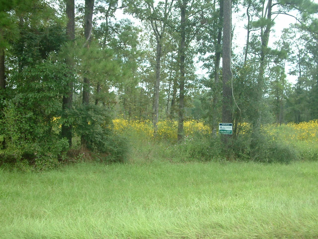 45 ACRES WOODED RESIDENTIAL LAND - PARTIAL SALES POSSIBLE