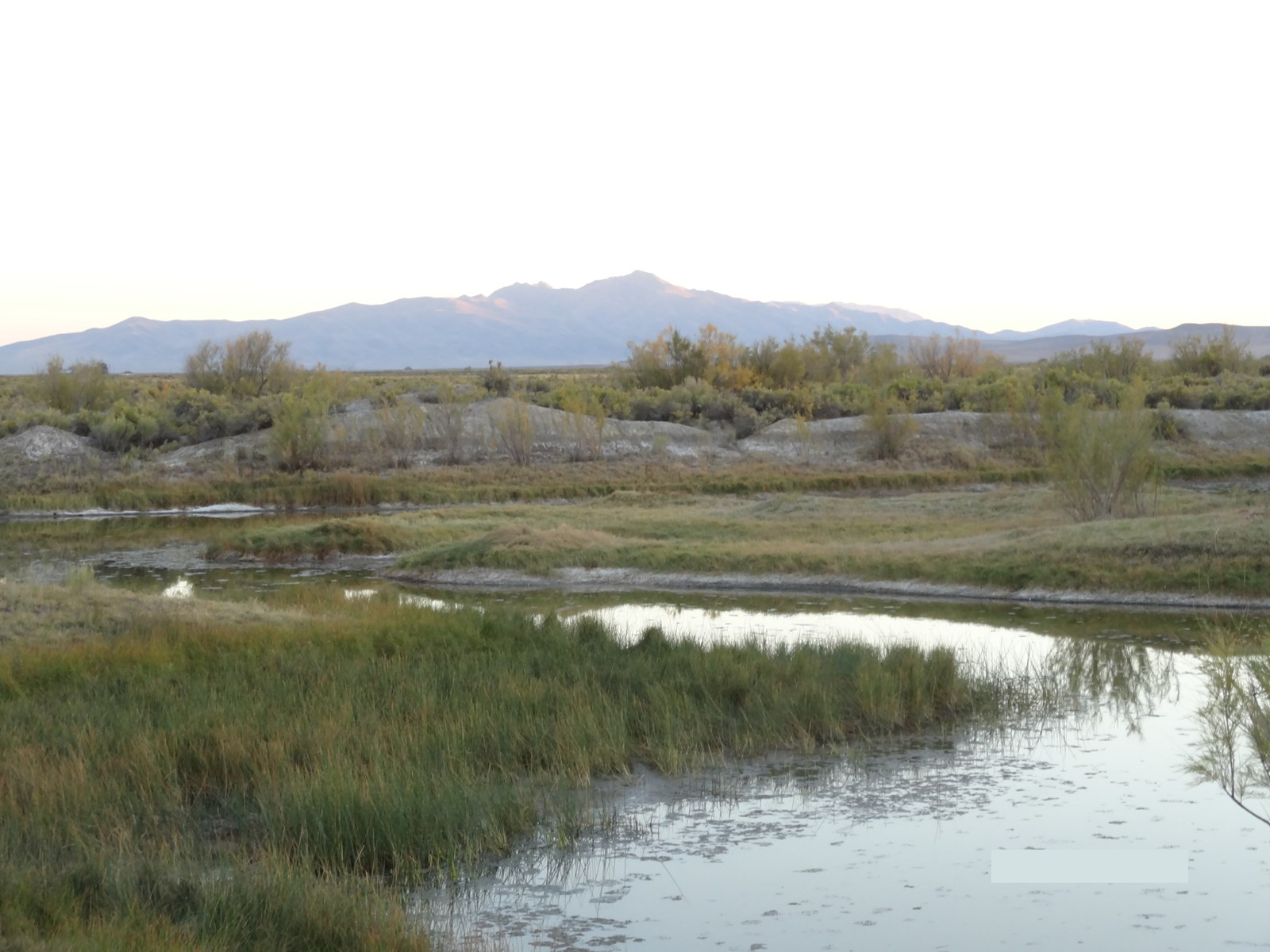 Nevada land for sale with surface water, mountain views