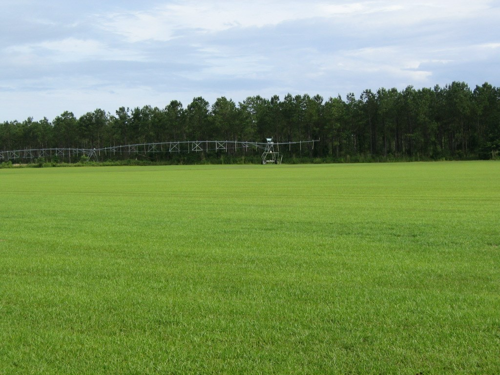 N FL LAND, HUNTING, FARM, RANCH, TIMBERLAND NEAR TALLAHASSEE
