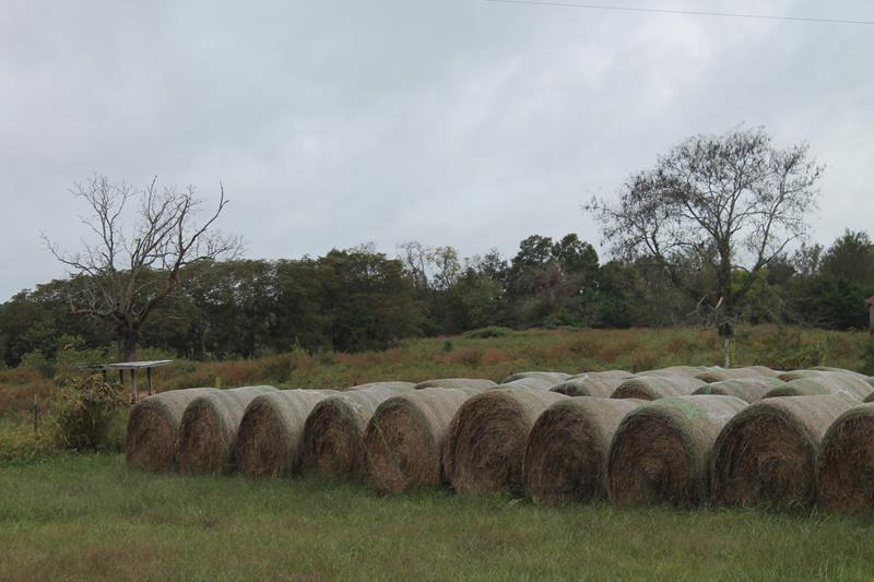 Missouri Ozarks river front cattle/ horse farm with acreage