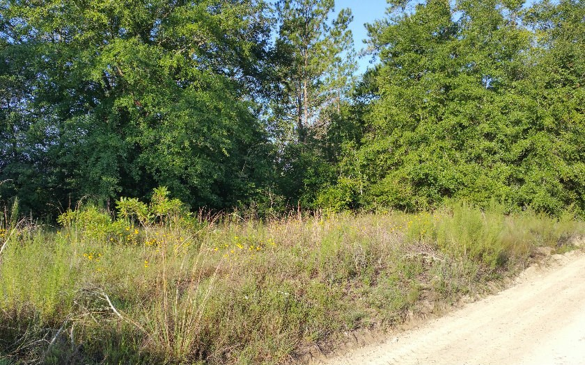 Two 1/4 acre lots for sale in Live Oak, FL