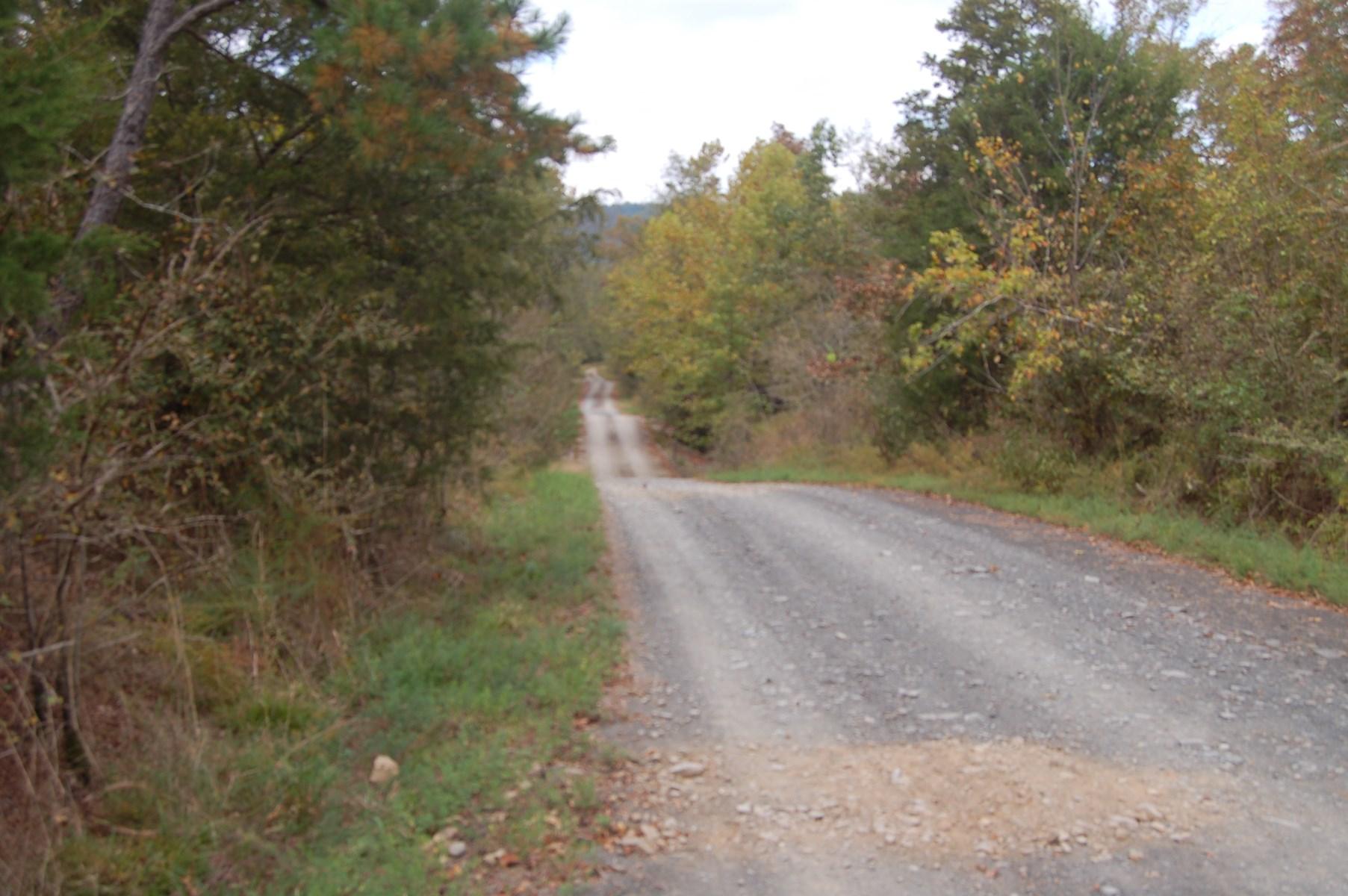 30 Acre Pine Plantation in Mena, Arkansas