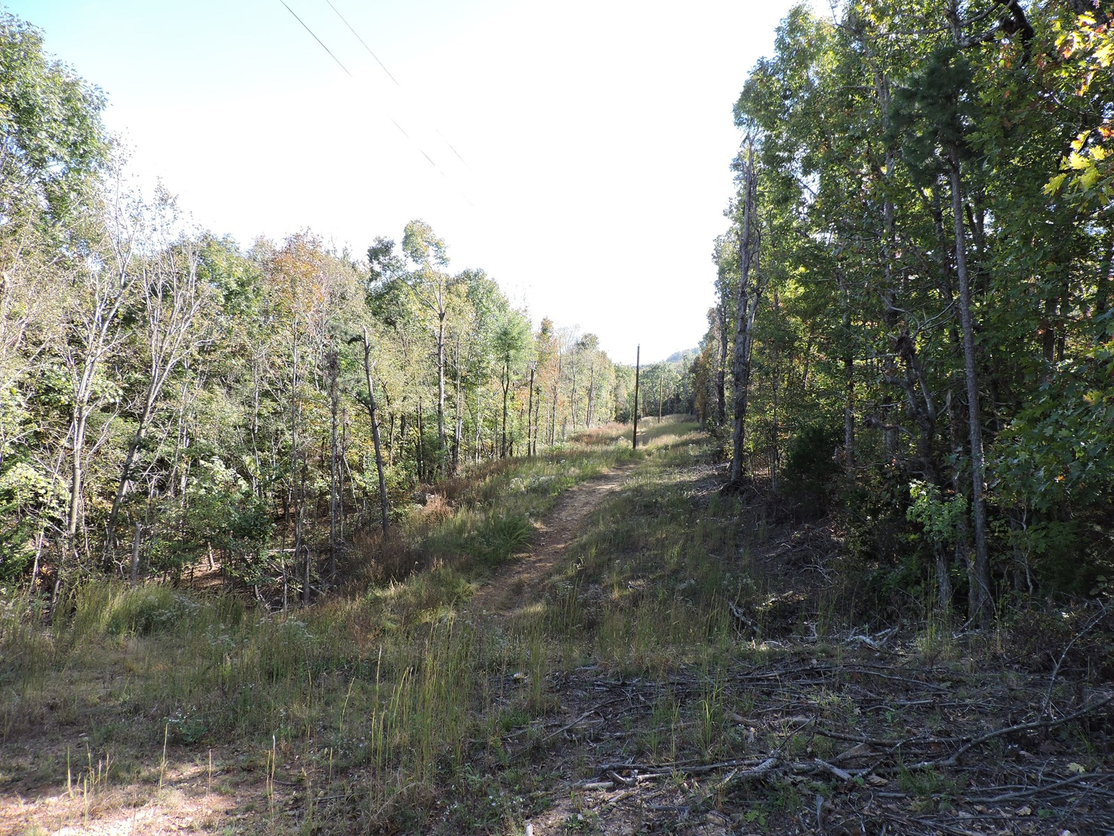 WOODED TIMBERLAND PROPERTY NEAR BUFFALO RIVER NATIONAL PARK