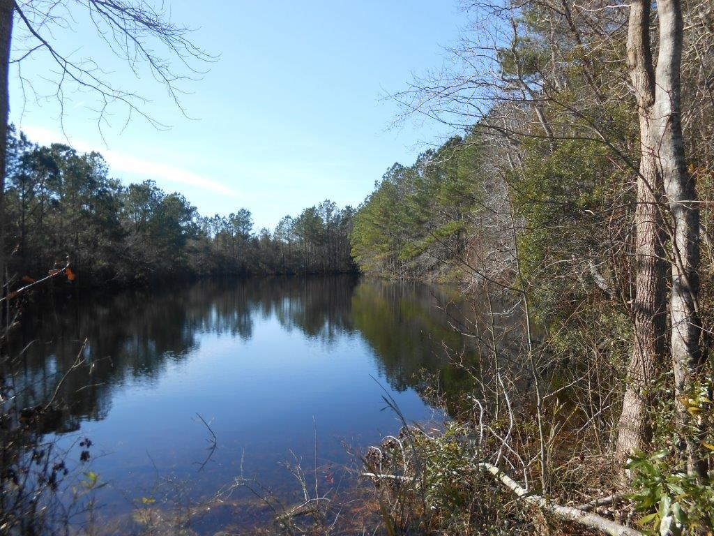 Washington County, NC Hunting Tract with Timber and Ponds