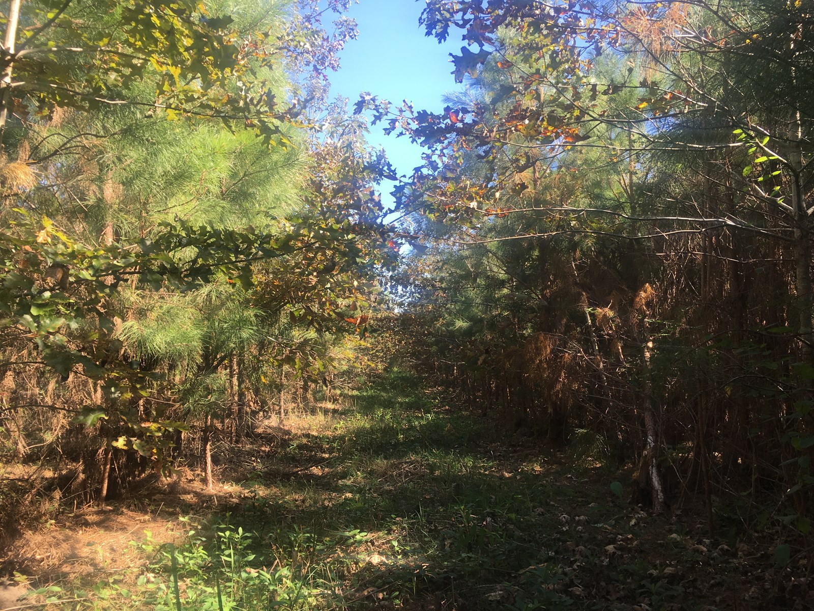 Small Washington County. NC Hunting Tract for Sale