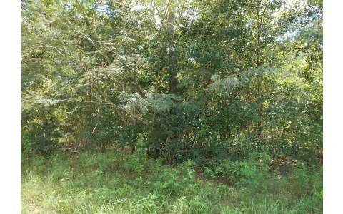 Nice Wooded 5 Acre Lot on Paved Road