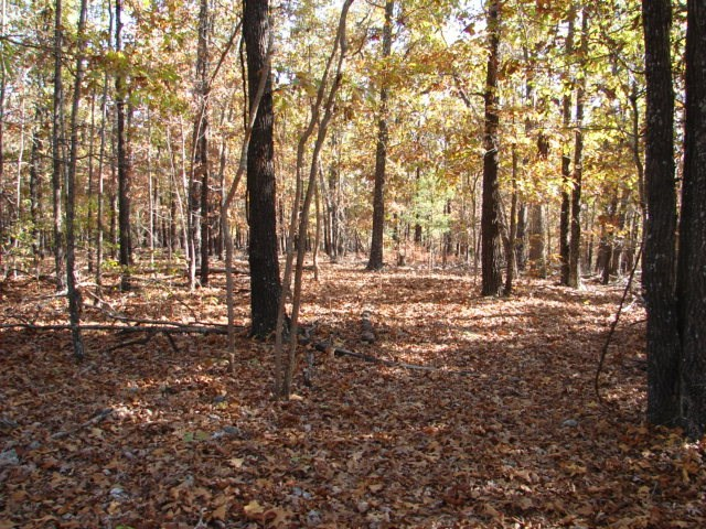 ARKANSAS OZARKS HUNTING RETREAT FOR SALE