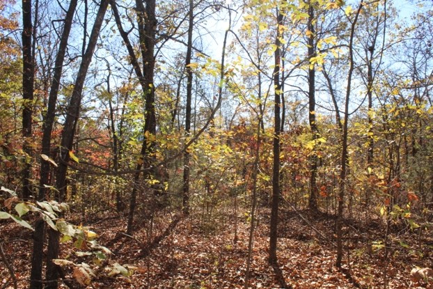 BUILDING LOT WITH OZARK MOUNTAIN VIEW
