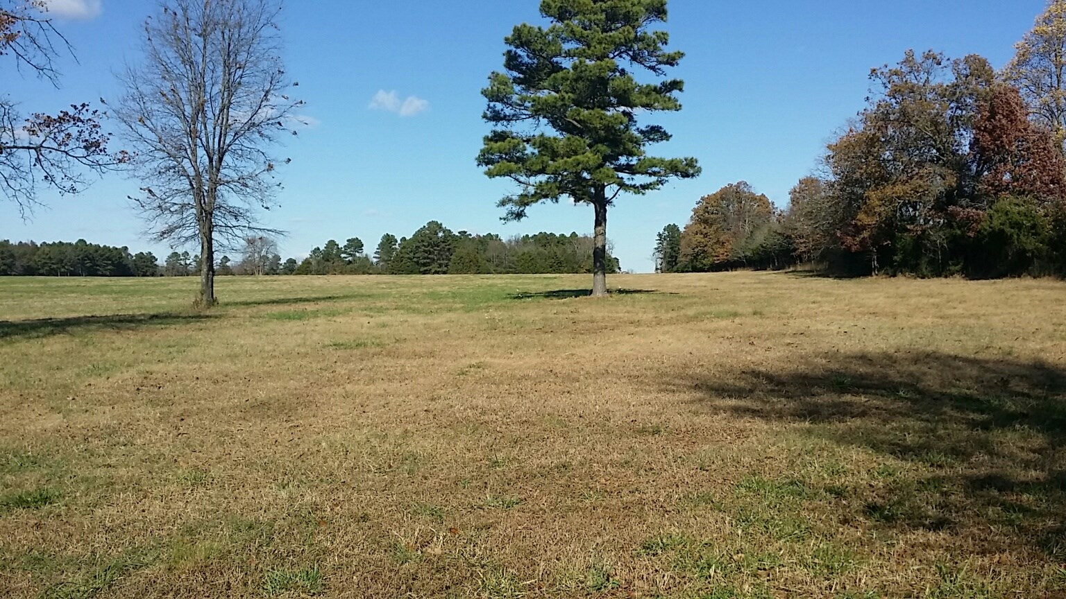 HUNTING LAND IN CLINTON, ARKANSAS  FOR SALE!!