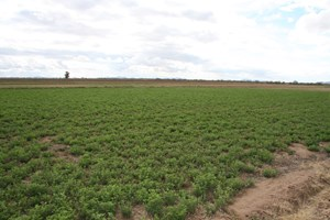 IRRIGATED FARM RANCH LAND FOR SALE ARIZONA HORSE PROPERTY