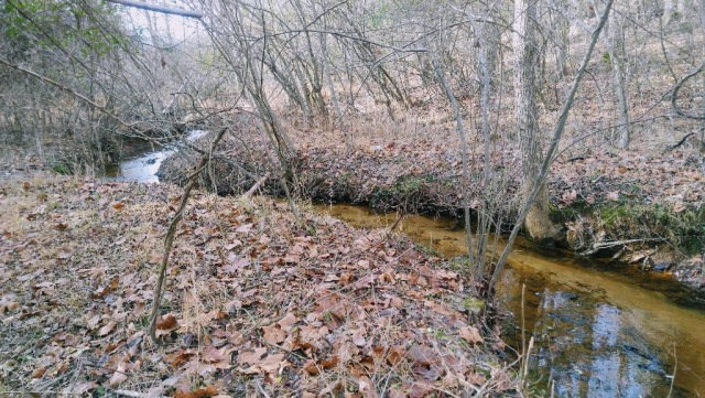 Land for sale in Pittsylvania County w/ hardwoods & wildlife