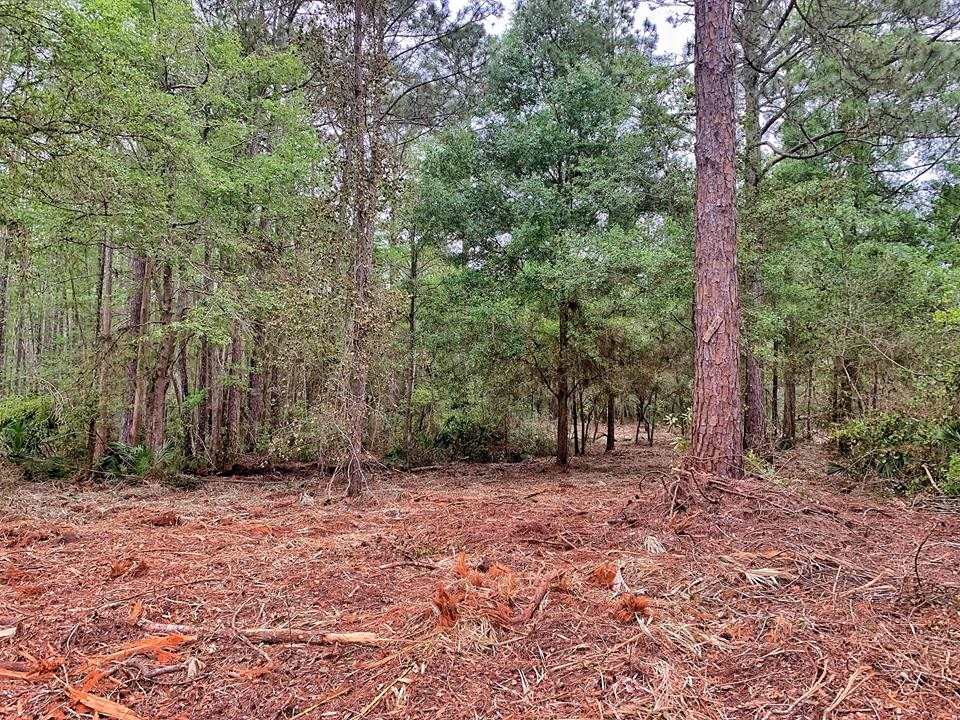 Great Location! 10 heavily wooded acres on paved road!