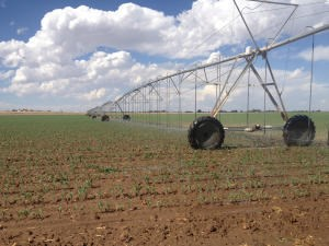 Central New Mexico  Irrigated Farm For Sale