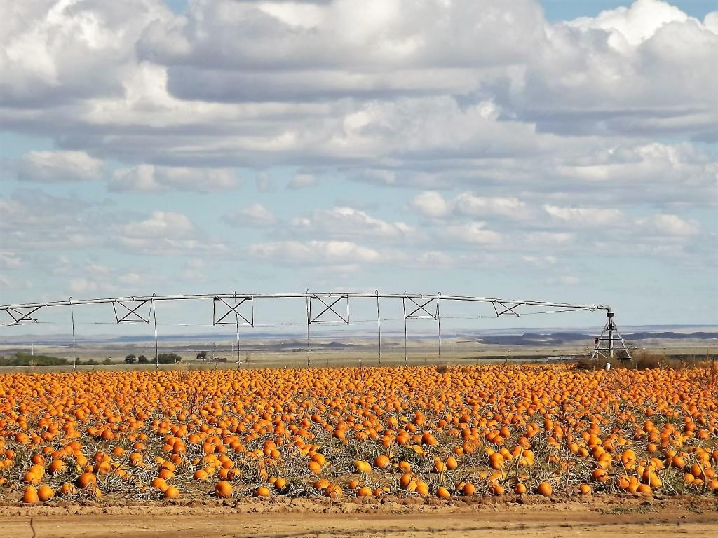 Estancia Valley NM Center Pivot Irrigated Farm For Sale