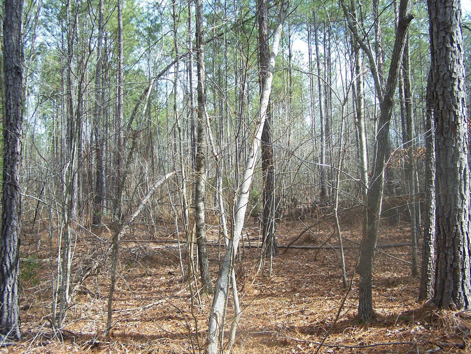 Timber, Ponds And Meadows In Blythewood, Sc