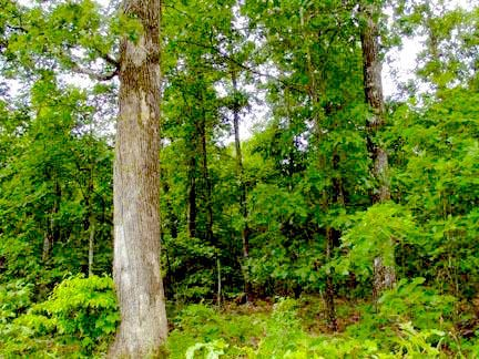 Wooded Acreage near Mark Twain National Forest For Sale
