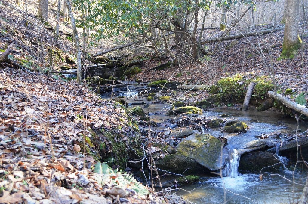 Mountain Land ON the New River, Sparta, NC. Over 16 Acres!