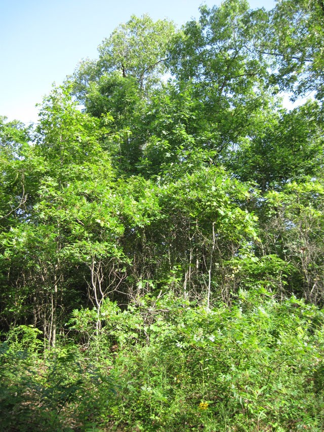 Recreational Hunting Land For Sale Near Viburnum, MO