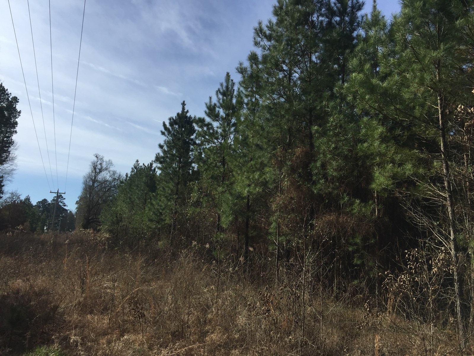 Timbered Home Site Land Acres near Gurdon, Arkansas for Sale