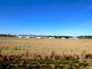 POULTRY FARM WITH LAND AND HOME WAYNE COUNTY MS