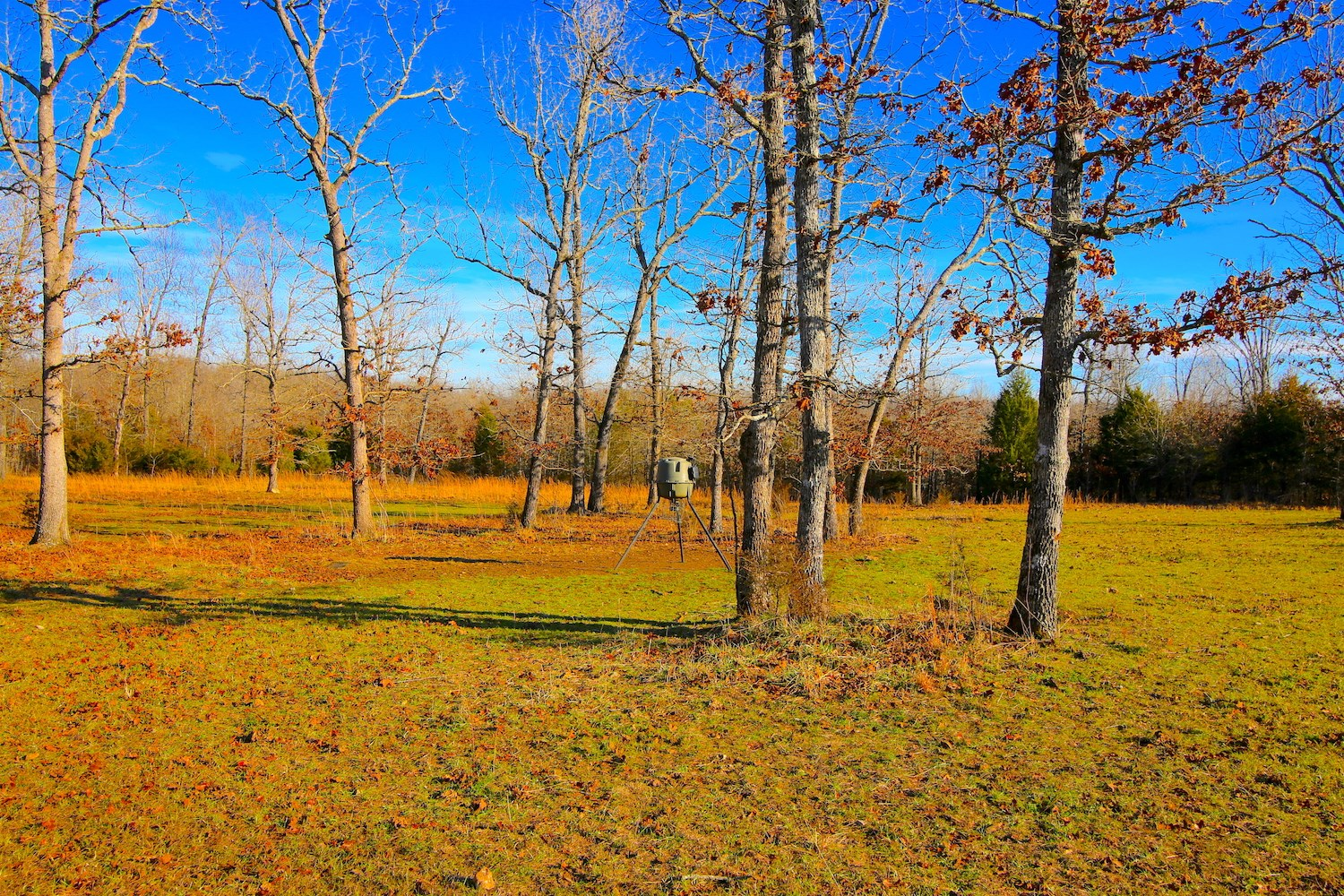Hunting Property For Sale in Fulton County Arkansas