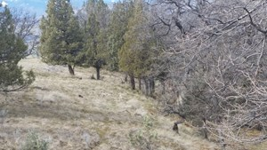 N. CA SISKIYOU COUNTY PRIVATE HILLTOP 3.17 ACRES FOR SALE