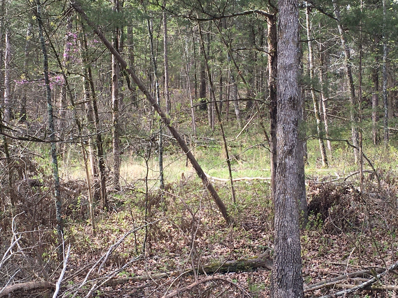 Hunting Property For Sale north central Arkansas, with creek