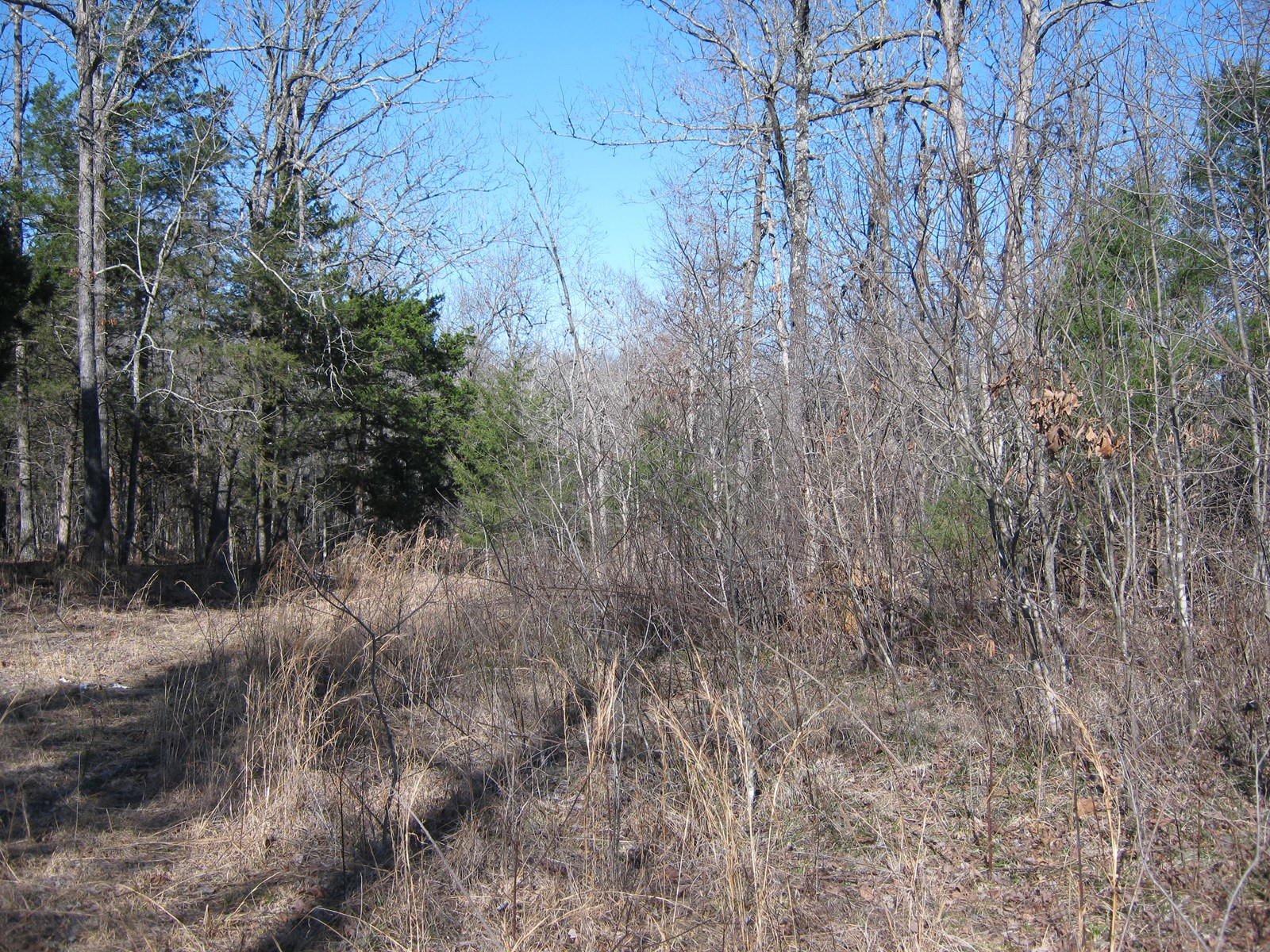Hunting Property For Sale In The Foothills Of The Ozarks
