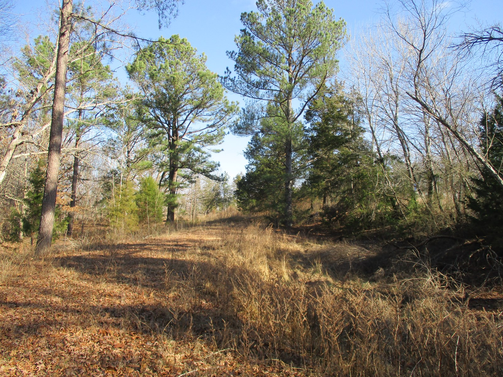 West Tennessee Land for Sale