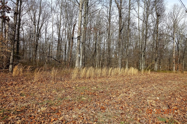Great Lots For Sale in Franklin Tennessee!