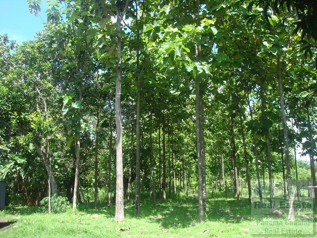 5 Hectar Teak Farm Penonome, Land for sale PANAMA
