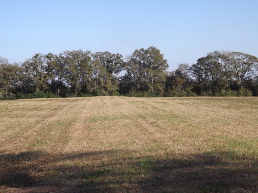 Cropland for sale with creek in Houston County, Al