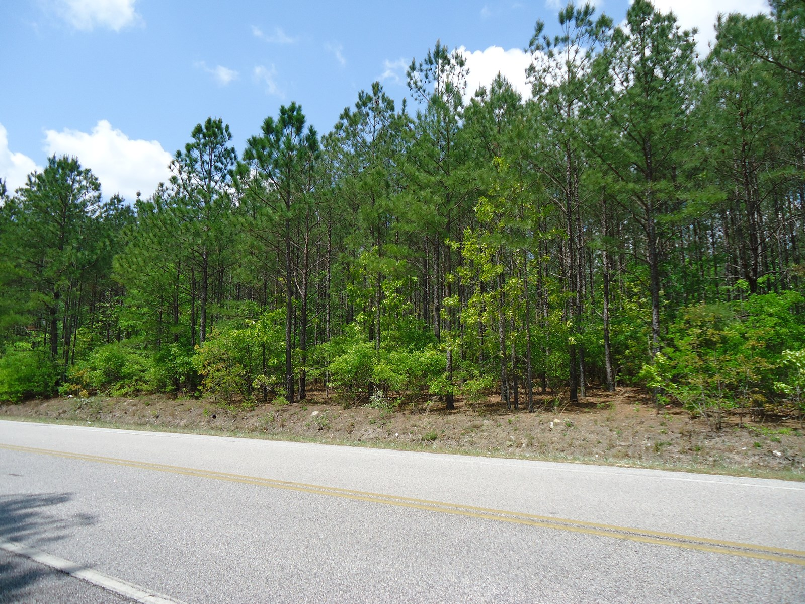 4.3 WOODED ACRES LEVEL BUILDING LOT IN CASSETT, SC