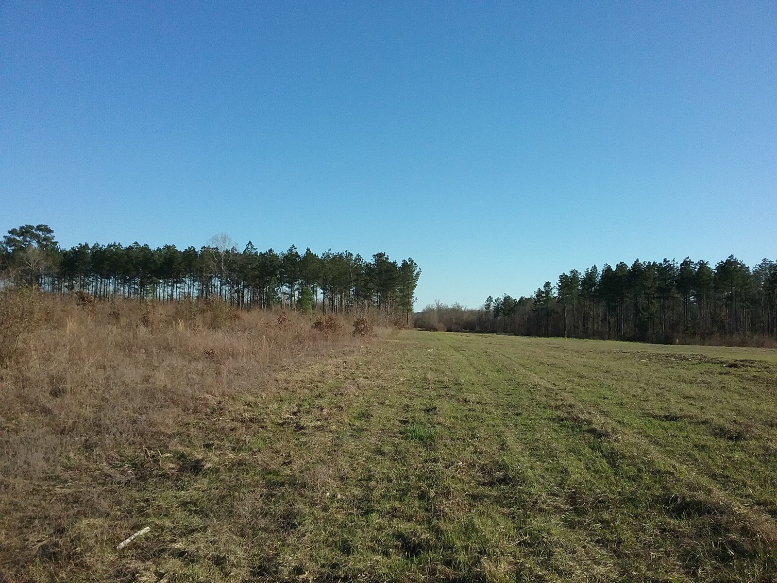 334 WOODED ACRES DEER HOGS WATER FOWL HUNTING LIVE WATER