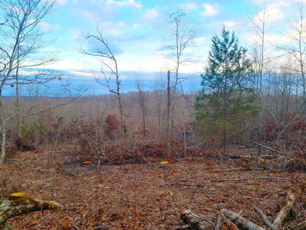 Wooded Acreage For Sale in Arkansas