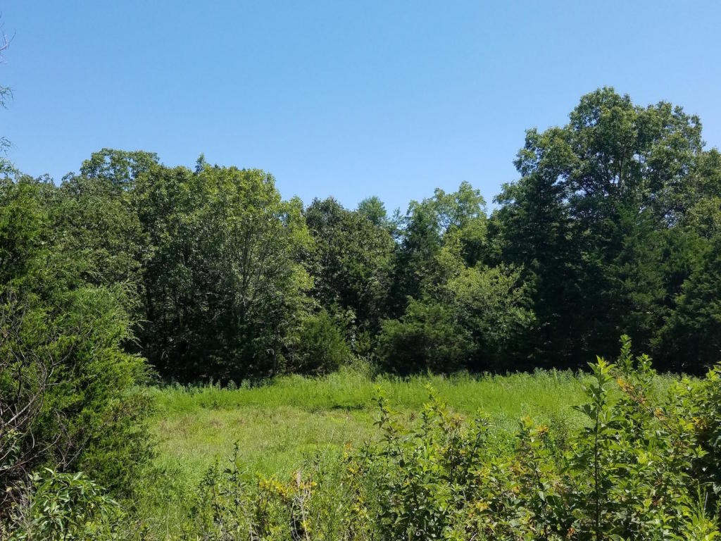 Farm / Recreational Land For Sale in Howell County Missouri