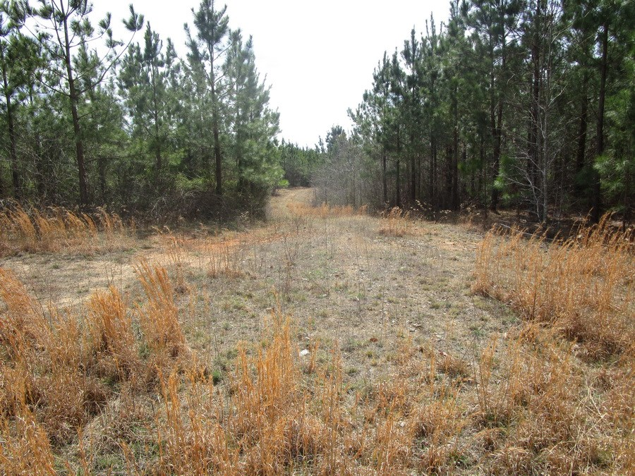 Hunting At It's Best on 10.38 Acres In Brunswick County, VA
