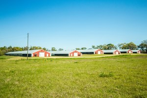 BEAUTIFUL SECLUDED 6 HOUSE POULTRY/CATTLE FARM FLORALA, AL