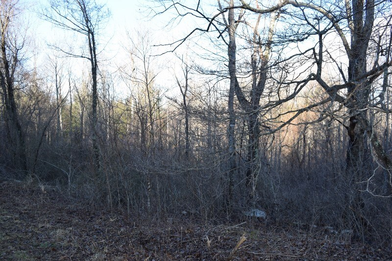 Secluded Wooded Lot in Floyd County VA!