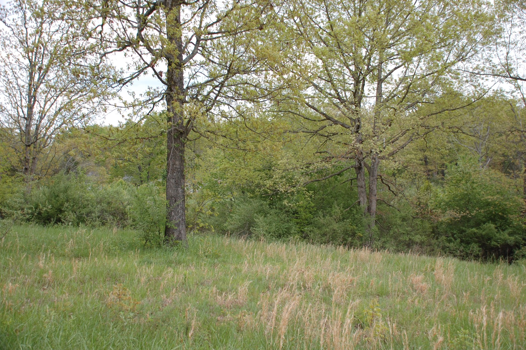 FOR SALE IN WEST PLAINS, MO - QUAIL RUN RESIDENTIAL LOTS