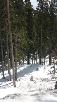 Mountain Land For Sale Near St Mary's Glacier, Colorado