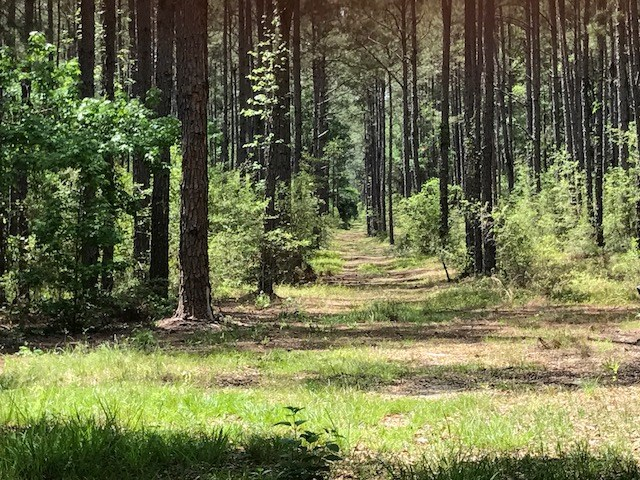 Timber hunting land for sale in Holmes County, FL