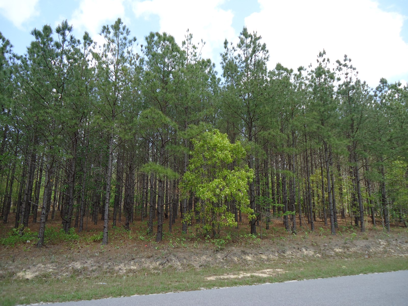 5.05 ACRE BEAUTIFUL HOME SITE LOT FOR SALE IN CASSATT, S.C.