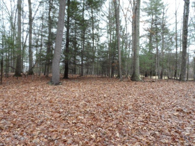 Land For Sale in Morgan County, WV
