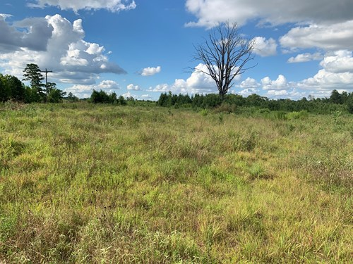 Investment Pine Timberland for Sale in Southwestern Arkansas