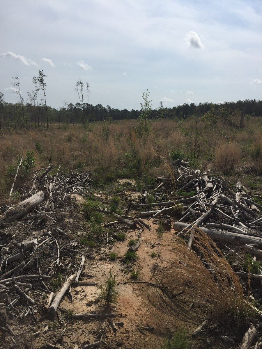 Young Planted Pine Investment for Sale in Southern Arkansas