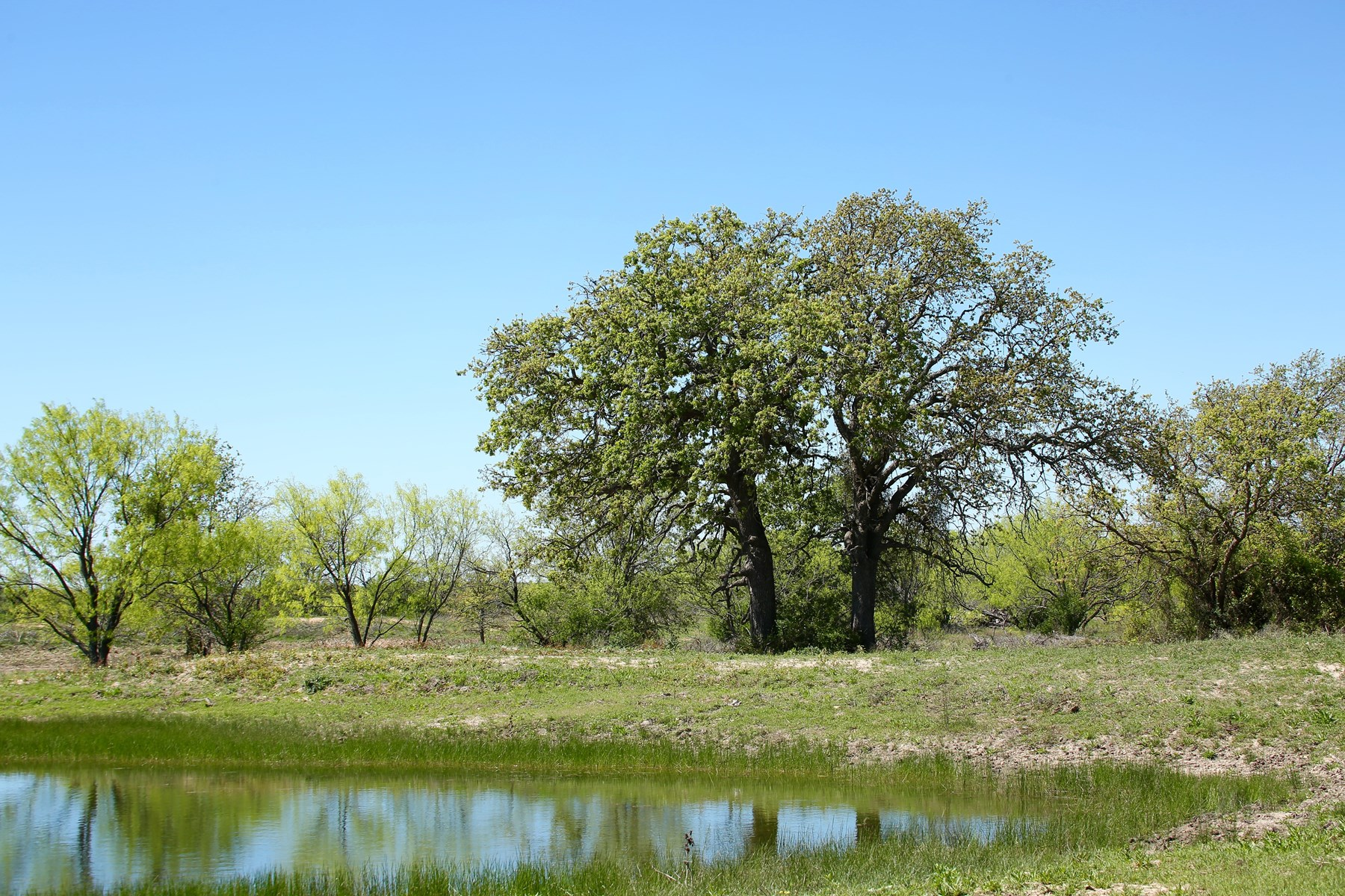 Brownwood TX Ranch for Sale - Hunting - Cattle - Minerals