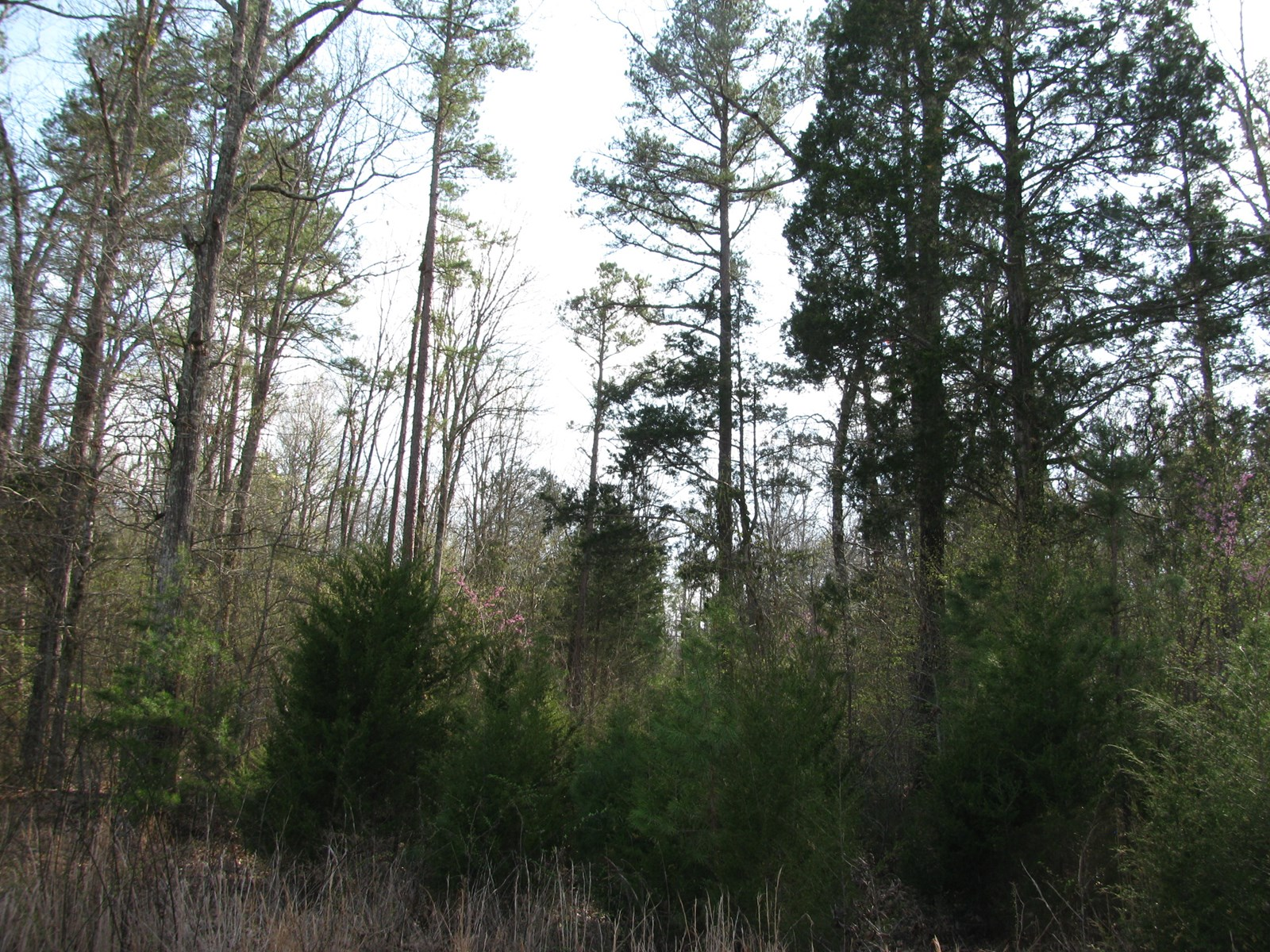 WOODED LAND FOR SALE IN HARDIN COUNTY, TN - HUNTING, TIMBER